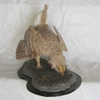 Sharp-tailed Grouse wood carving by artist Bill Windsor on Wood Carvings by Bill.